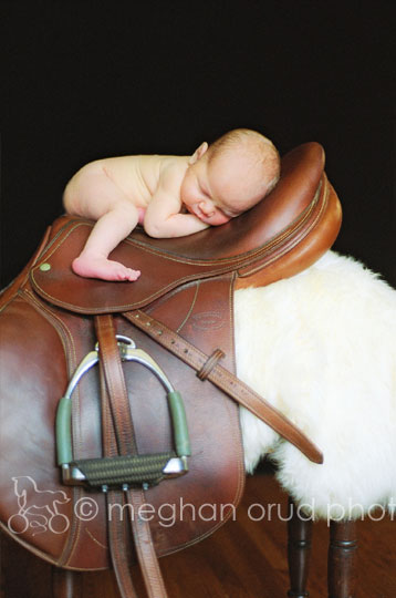 4 day old equestrian
